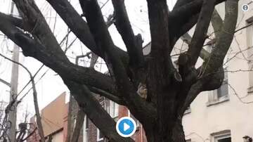 Cole - Just a squirrel...in a tree...eating an egg roll.