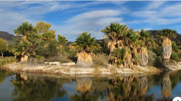 Tucson Happenings - Tucson Agua Caliente Park Is Now Open For A One-Time Fishing Opportunity