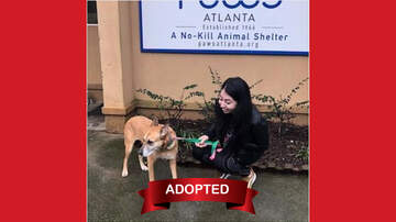 Wet Nose Wednesday - Wet Nose Wednesday 12/19 - Quinn ADOPTED!