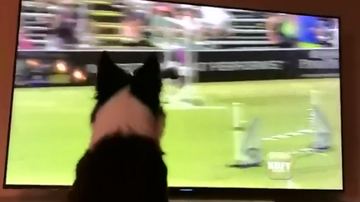 None - Dog Watches Himself Win Pro Challenge