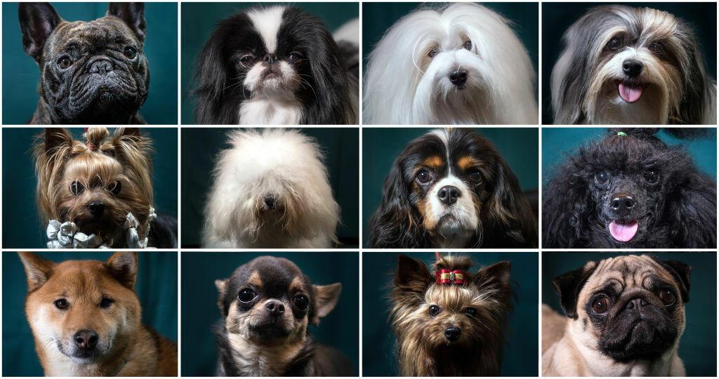 Twenty Smartest Dog Breeds According To Psychologist