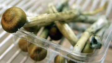 Weird News - Denver Could Become 1st U.S. City to Decriminalize Use of Magic Mushrooms