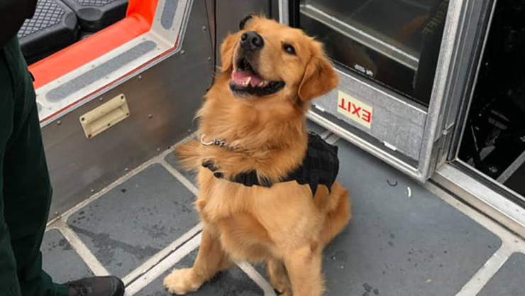 k-9 had to be given anti-overdose medication after accidentally ingesting it while searching party cruise