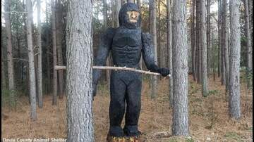 Coast to Coast AM with George Noory - Bigfoot Statue Bewilders Drivers