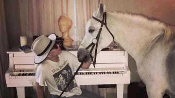Entertainment News - Lady Gaga Mourns Dying Horse Arabella Following Critics' Choice Award Wins