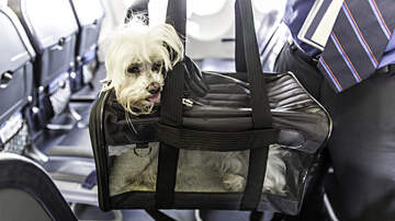 Mojo in the Morning - Phone Scam: We lost your dog on the plane!
