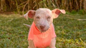 Company Critters presented by Holistic For Pets - Piglet has found his forever home!