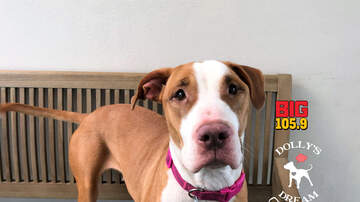 Doc Reno - Doc's Dog of the Week: Viviana