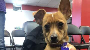 Pet of the Week - Meet Sassy, our PET OF THE WEEK!