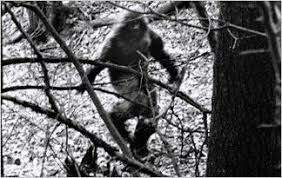 Your Morning Show - Bigfoot Sighting