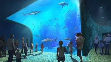 Dusty - An inside look of the new St. Louis Aquarium!