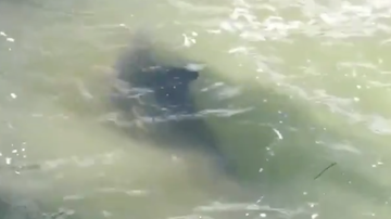 Bobby Bones - Lunchbox Freaks Out Over Dolphin Near Him