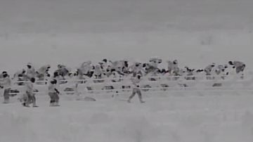 Trevor Carey - WATCH: Migrants Cross Remote Section of New Mexico Border