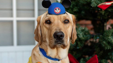 #iHeartSoCal - This Service Dog's Disneyland Trip Will Melt Your Heart!