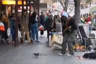 Pigeon Dances Along with Street Performer