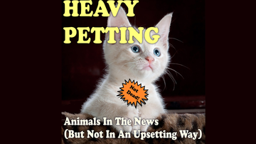 KFI Squadcasts Blog - Heavy Petting w/Wayne Resnick