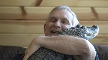 JoMaestro - VIDEO: Check Out This Man's Emotional Support ALLIGATOR!