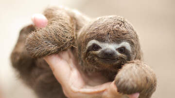 BJ The Web Guy - Boston Zoo Allows You To Eat Breakfast With Sloths