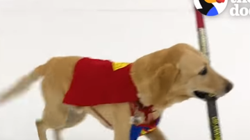 The Brett Andrews Radio Show - Dog Loves to skate!