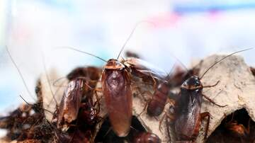 Mo' Bounce - You Can Now Name a Cockroach After Your Ex