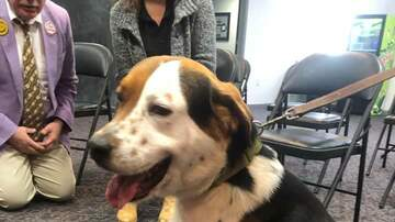 Pet of the Week - Meet Goku, our PET OF THE WEEK!