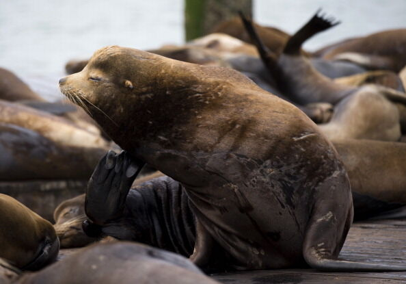 Even this seal knows the government is bogus (photo by Getty Images).