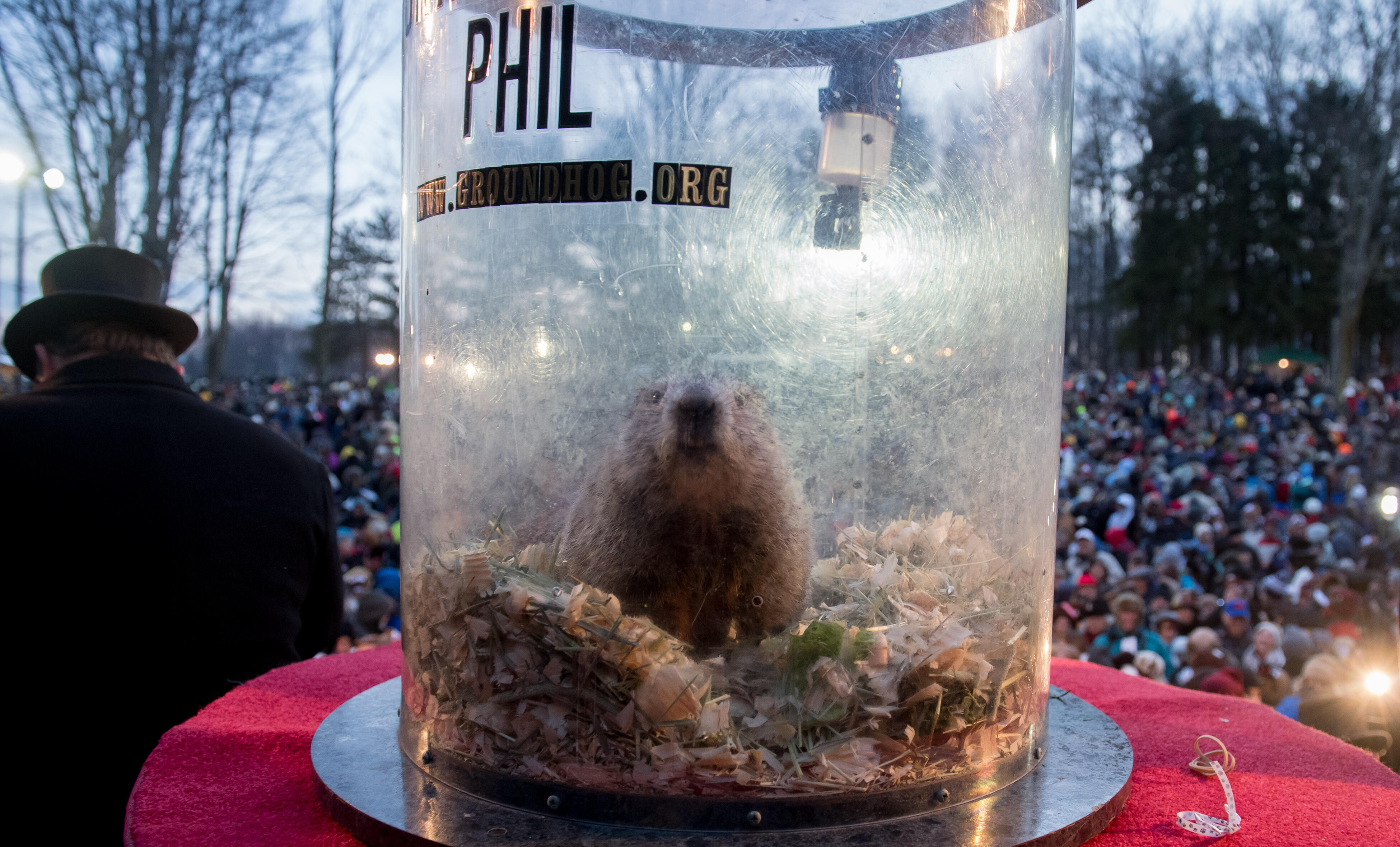 Expert Shares Facts About Groundhogs