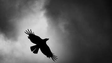 Quinn & Cantara Morning Show - Weird Lights And Noises Will Be Heard in Albany To Disperse Crows
