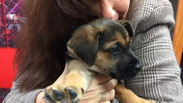 Pet of the Week - Adorable puppies, ready for adoption at Humane Society of South Mississippi