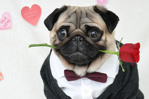 20 Percent Of People Plan To Buy Valentine's Day Gifts For Their Pets