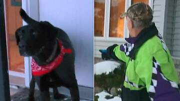 Trevor D in the Morning Show -  Dog Found an 87-Year-Old Woman Who Fell in the Snow and Couldn't Get Up