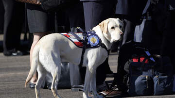 Lisa Foxx - New USPS Stamps Honor Military Dogs