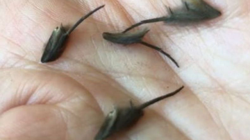 Johnjay And Rich - Creepy Creatures Man Found Wriggling On Kitchen Floor Has Experts Stumped