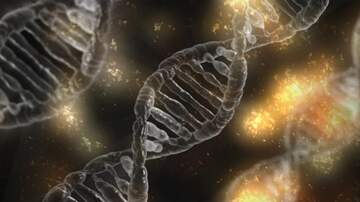 KGOR Mornings Blog - Chicago woman finds 15 half siblings through DNA test