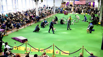 1450 WKIP News Feed - Westminster Dog Show Is Now Underway