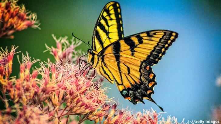 Study Warns of Insect Armageddon