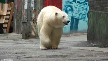 Coast to Coast AM with George Noory - Polar Bears Invade Russian Town