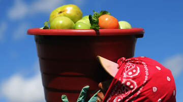 Tampa Local News - Florida Tomato Growers Welcome Mexico Dumping Probe