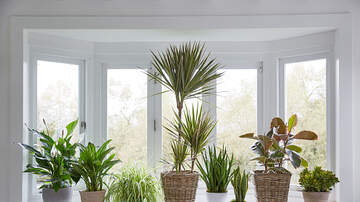 Jesse Lozano - These Are The Best Indoor Plants If You Were't Blessed With A Green Thumb