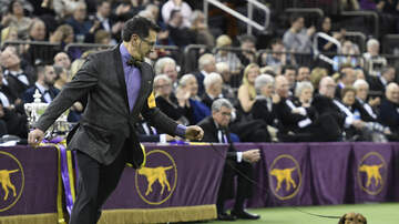 Wendy Wild - Westminster Dog Show Without The Dogs Is Hilarious Fun