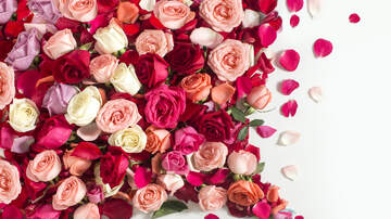 Bruce, John and Janine - If Your Valentine Isn't Your Sweetheart, What Colors Of Roses Mean