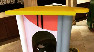Marty Manning - Haute Dogs!  Designer dog houses up for auction to benefit AAWL!