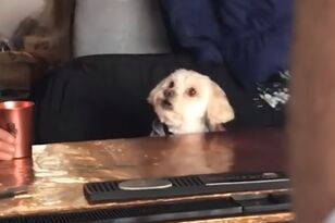 Dog Watches 101 Dalmatians at the Bar
