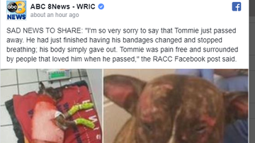 Steve - 'Tommie,' dog set on fire and abandoned in Richmond park, has passed away