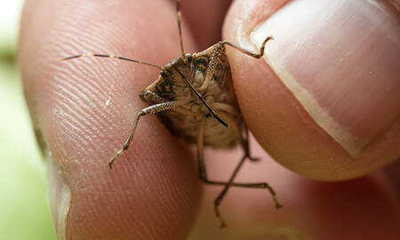 National News - Polar Vortex May Have Killed Off Numerous Invasive Species Of Insects