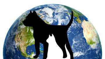 Dog Blog - World Spay Day = Get your cat fixed for FREE! Dogs for $10 or less!