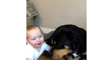 Beth & Friends - Dog and Little Boy are Best Buds
