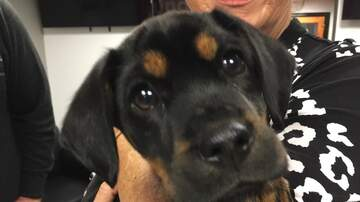 Pet of the Week - Meet Trusty, a 2 month old Hound Mix who is looking for his forever home.