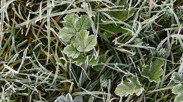 MORNING NEWS - Frosty San Diego...Watch Your Pets And Your Plants