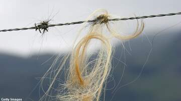 Coast to Coast AM with George Noory - Yowie Hair Found on Fence?